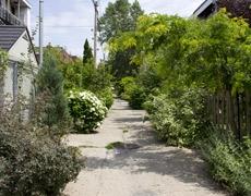 Ruelles vertes, embellissement et biodiversité