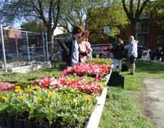 La distribution de fleurs pour embellir le quartier !