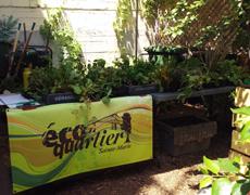 Retour sur la distribution de plantes potagères