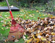 La collecte des feuilles mortes et des résidus verts