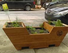 De nouveaux carrés d'arbres adoptés et le retour des mange-trottoirs!