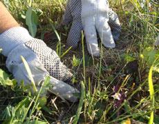 Luttons ensemble contre l'herbe à poux