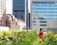 Budget participatif de la Ville de Montréal : soumettez vos idées!